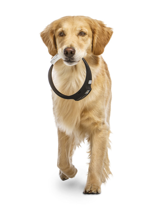 Voyce Dog Collar: The remarkable new high-tech collar that gives your dog, well, a voice.