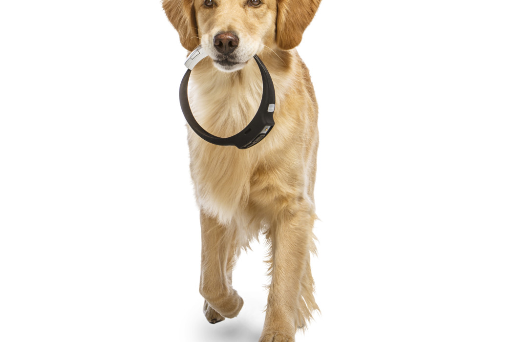 Voyce Dog Collar | Cool Mom Tech
