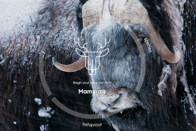 BBC Earth: Attenborough Story of Life app | Our cool free app of the week