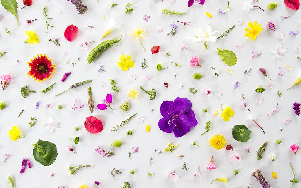 Free spring flowers desktop wallpaper by Julie Lee at Geek Sugar