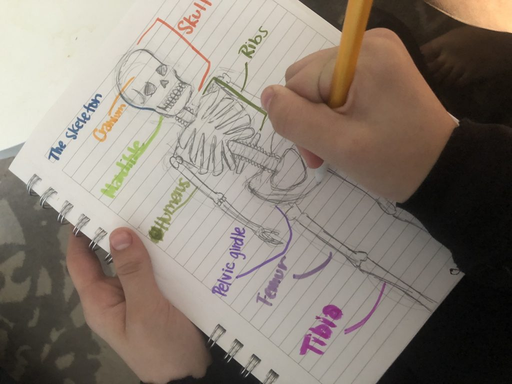 Kids science journal ideas for older grade schoolers: Make an anatomy journal and label the different systems, organs and parts of the body | Cool Mom Tech