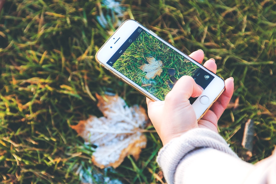 Is that poison ivy? The new Seek app can tell you that, and a whole lot more.