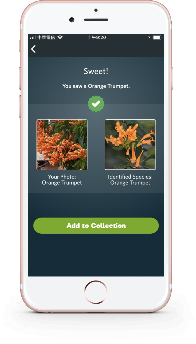 Match species you see with a database of images, with the Seek app from iNaturalist.
